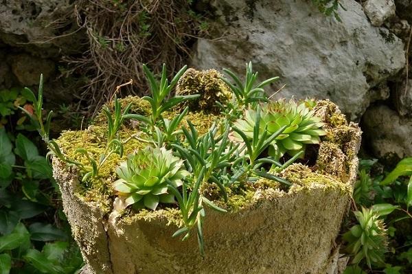 Giardino roccioso giardinaggio per tutti - Giardino roccioso foto ...